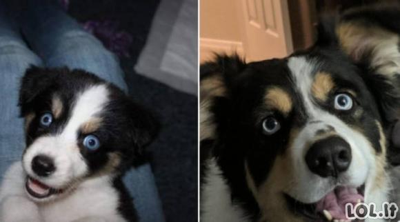 Kai šunyčiai užauga [GALERIJA]