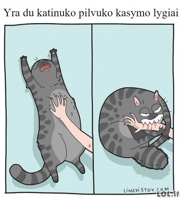Kai kasai katino pilvuką