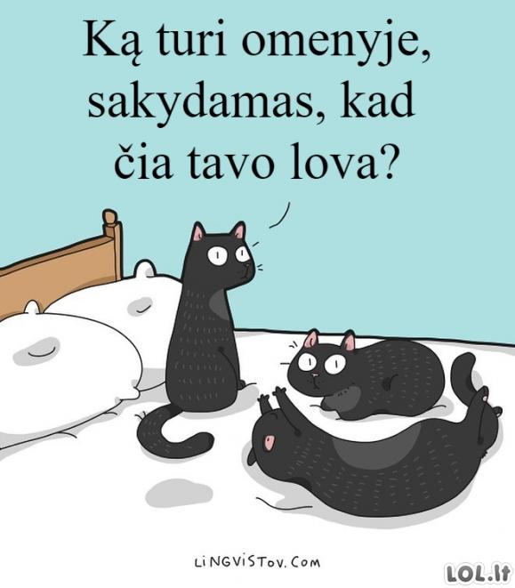 Katinai ir lova