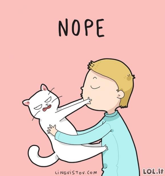 Viską ignoruojantis katinas