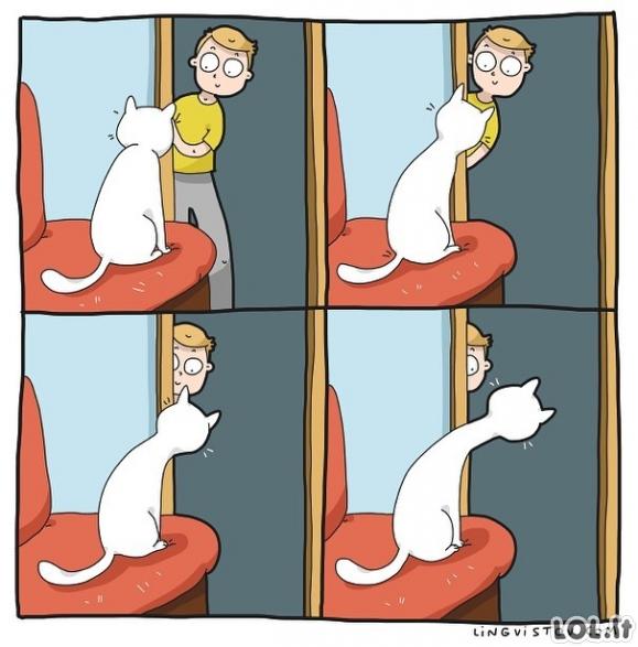 Žaidimas su katinu