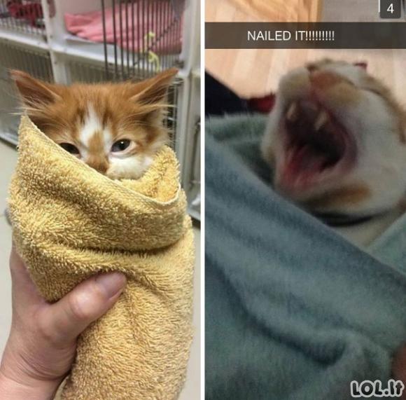 Katinai, susukti į burrito - visiški Purrito! [GALERIJA]