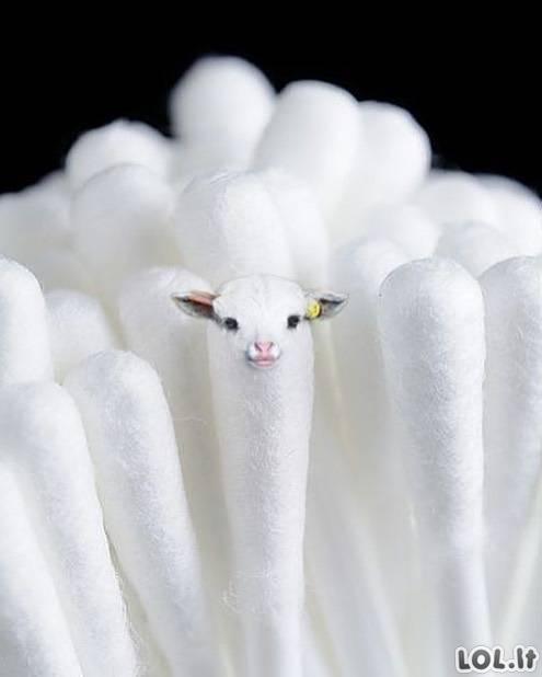 Smagūs fotošopai su gyvūnais [GALERIJA]