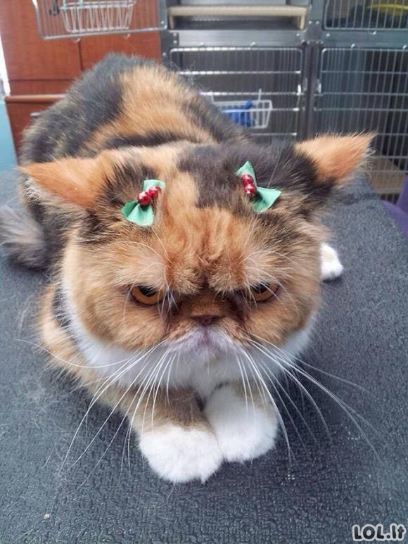 Šiems gyvūnams jau atsibodo Kalėdinis m*šlas [GALERIJA]