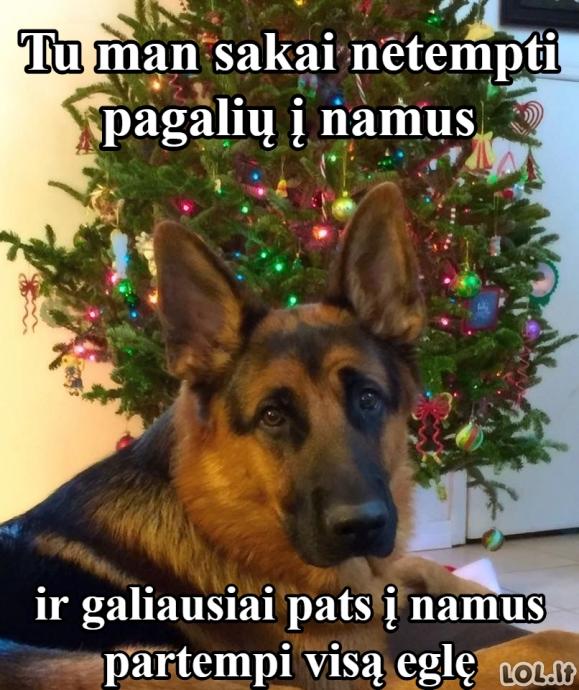 Pasimetęs šuo