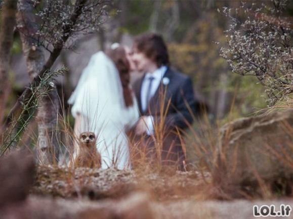 Vestuvinės nuotraukos, kurios neatsidurs albume [GALERIJA]