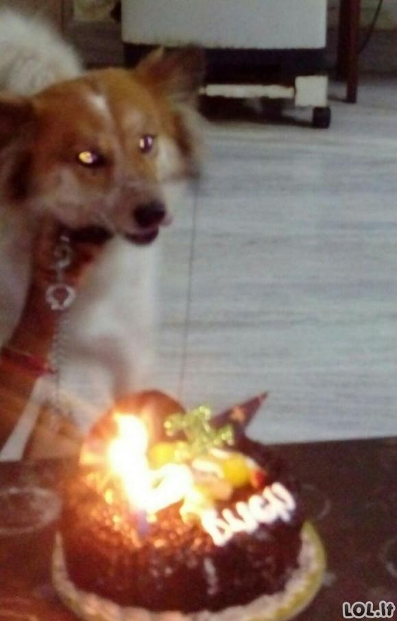 Gyvūnai, kurie turėjo smagesnį gimtadienį, nei tavo