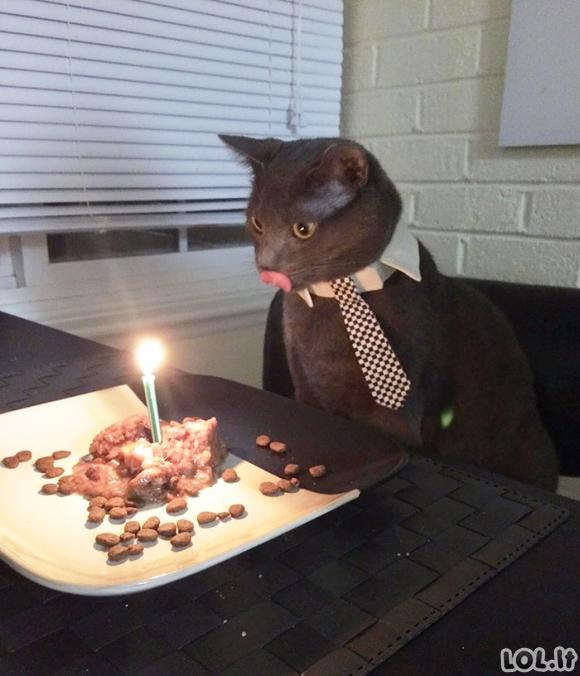 Gyvūnai, kurie turėjo geresnį gimtadienio vakarėlį, nei tu