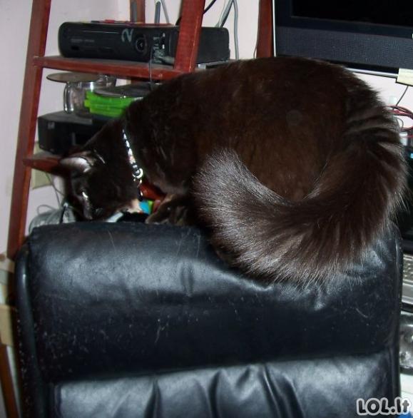 Katinai - pūkuotukai [GALERIJA]