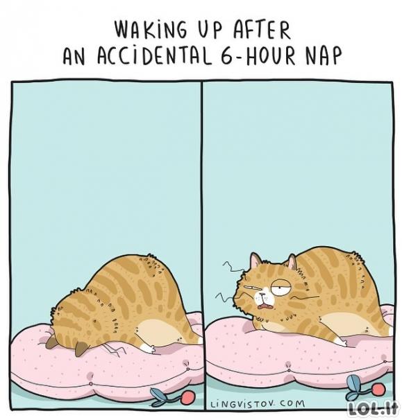 Po pokaitinio 6 valandų miego