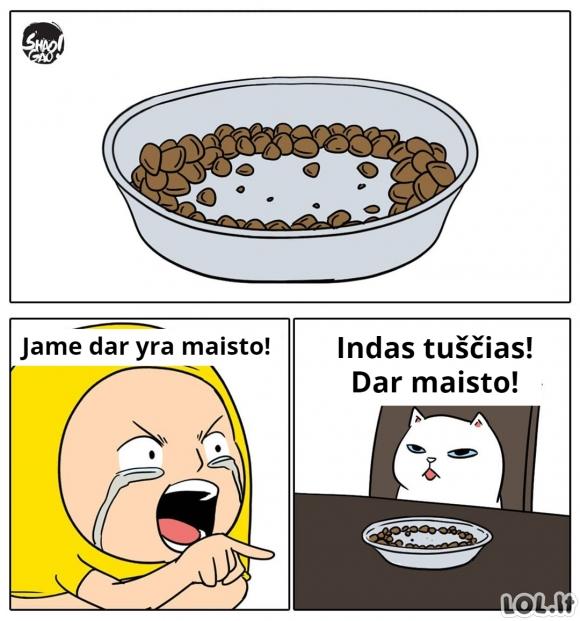 Katinų maisto indelis