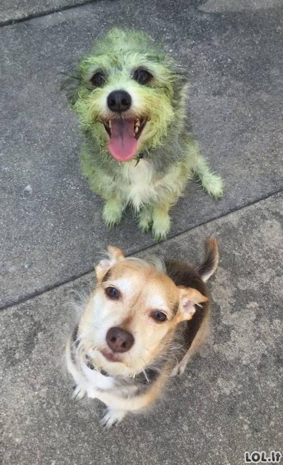 Šie šunys pakels Jums nuotaiką [GALERIJA]