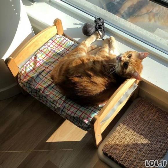 Katės lovytėse [GALERIJA]