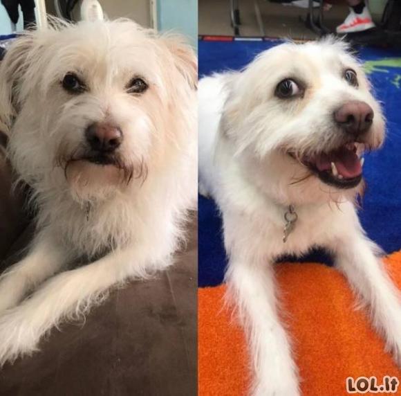 Gyvūnų nuotraukos prieš ir po [GALERIJA]