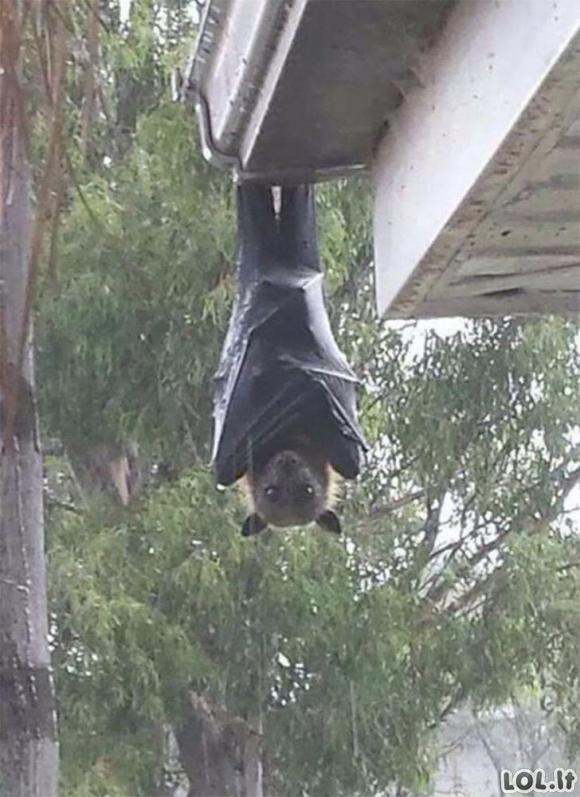 Nejaukios nuotraukos iš Australijos, parodančios, jog ten gyventi gali tik patys drąsiausi [GALERIJA]