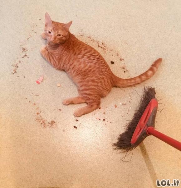 Kaip atrodo gyvenimas su katėmis [GALERIJA]