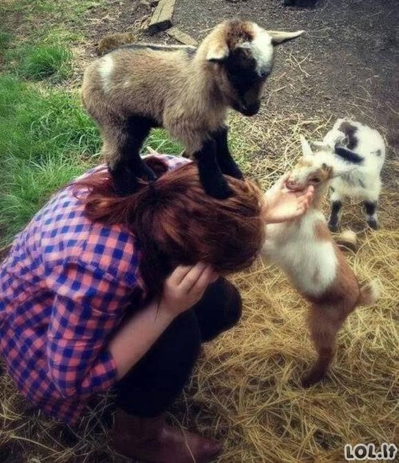 """Šiems gyvūnams negalioja joks """"negalima"""" [GALERIJA]"""