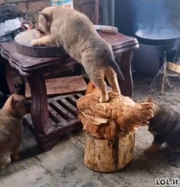 Šie gyvūnai neturi jokio gėdos jausmo [GALERIJA]