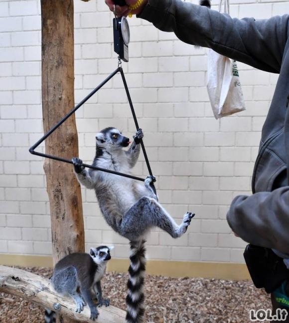 Kaip sveriami gyvūnai zoologijos sode [GALERIJA]