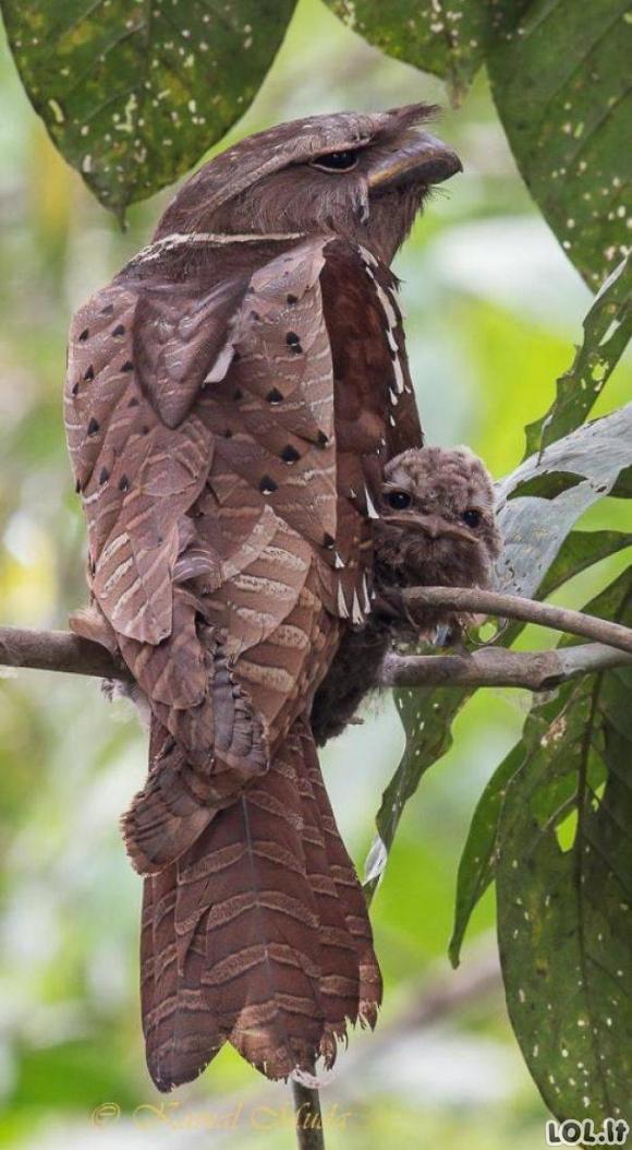 Unikalūs paukščiai su savitu grožiu [GALERIJA]