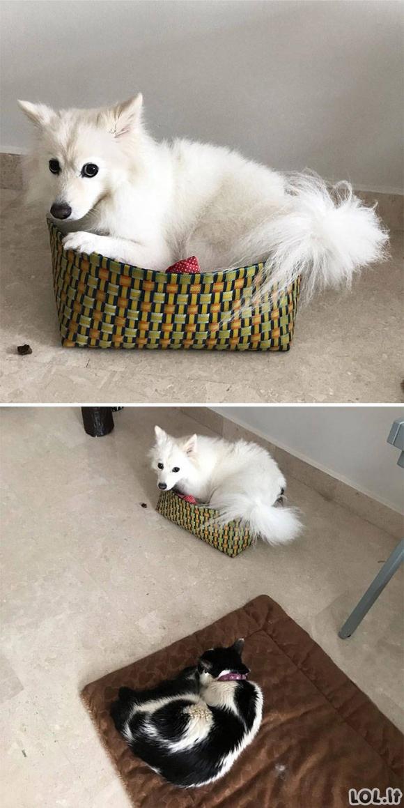Katės demonstruoja kas namuose lyderis [GALERIJA]