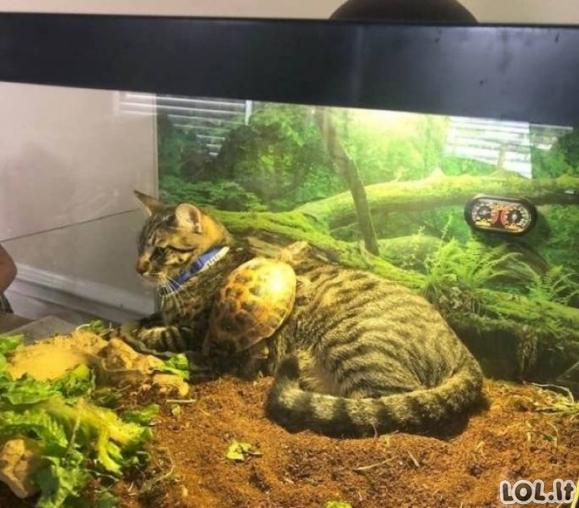 Labai linksma gyvūnų galerija