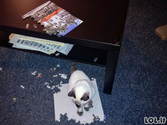 Kai tu bandai užbaigti puzlę, bet turi kačių namuose [GALERIJA]