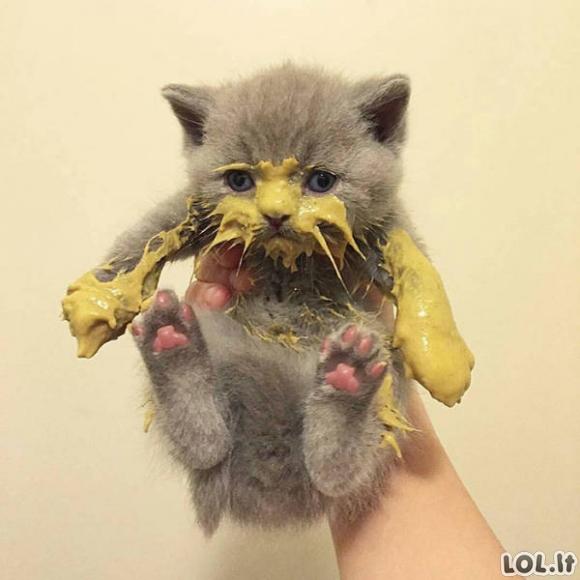 Katės nemoka gražiai valgyti [GALERIJA]