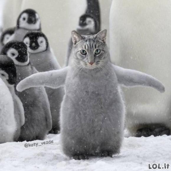 Geriau uždėkime kačių snukučius! [GALERIJA]