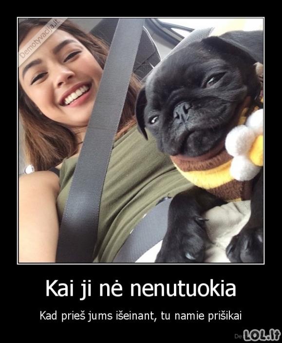 Pasalūniškas šuo