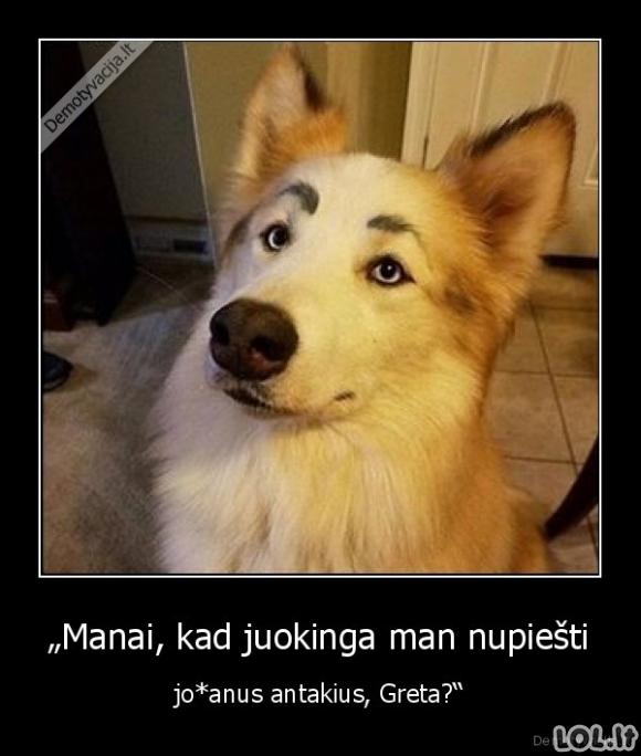 Antakiai šuniui