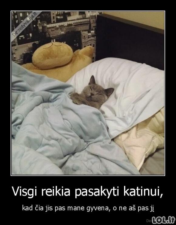 Kai katinas per daug įsijaučia