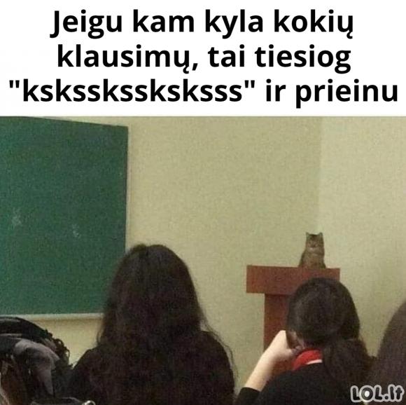 Katinas profesorius