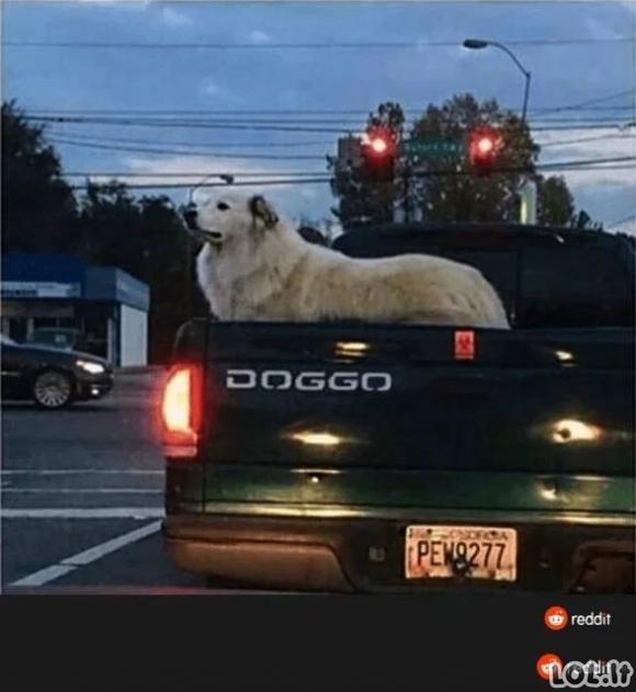 Mėmės su gyvūnais [GALERIJA]