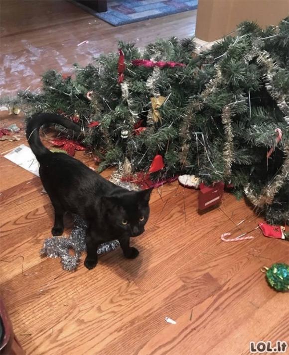 Katės dievina Kalėdų eglutes [GALERIJA]
