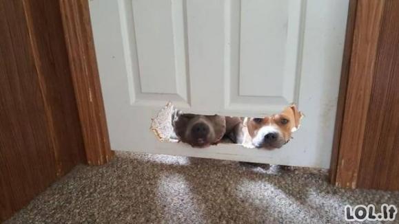 Nedorėliai šunys [GALERIJA]