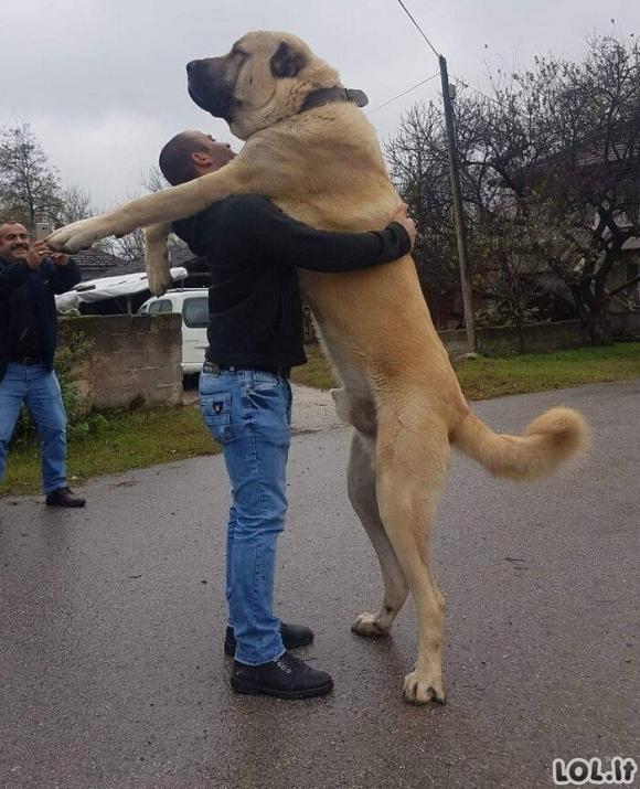 Čia tai dideli šunyčiai! [GALERIJA]