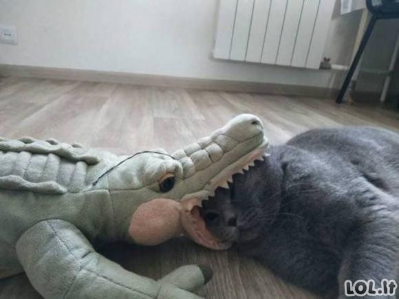 Juokinga gyvūnų galerija [GALERIJA]