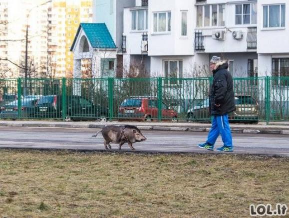 Rusų gyvenimo kasdienybės nuotraukos [GALERIJA]