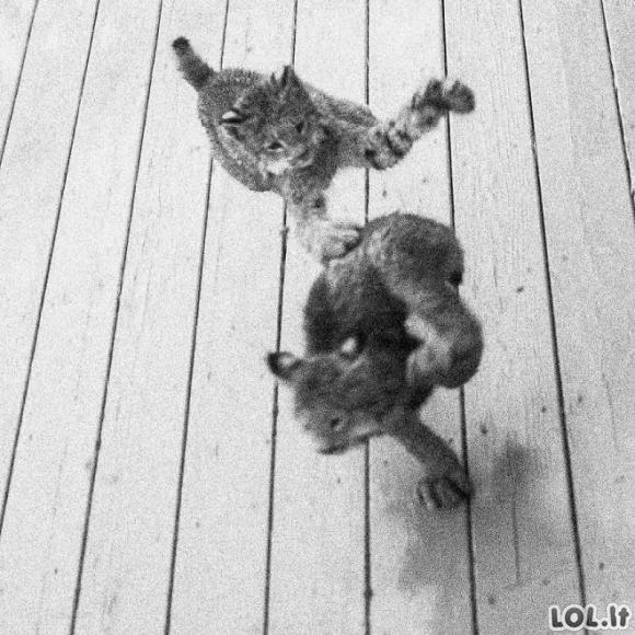 Vyras prabudo nuo keistų garsų, todėl nuėjo patikrinti kas dedasi šalia jo verandos