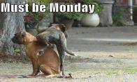 Juodi pirmadienio anekdotai