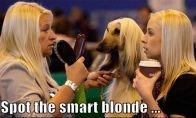 Arabai, meilužiai ir protinga blondinė