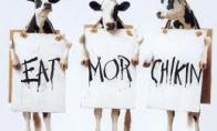 Moterys, kiaulė, karvė ir AIDS