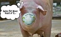 Kiaulių gripas, policija ir seksas tryse