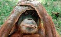 Anekdotai: nagingas santechnikas, pakvaišusi gorila ir kuklus studentas