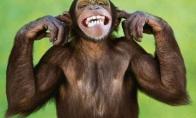 Apie beždžiones, statybininkus ir kiti