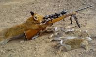 Apie medžioklę, gimdymo namus ir kiti