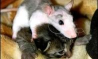 Apie peles, poch*istus ir kiti