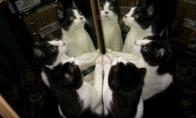 Apie riebalus, mylimuosius ir kates