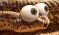 Apie gyvatę, senelę ir kiti